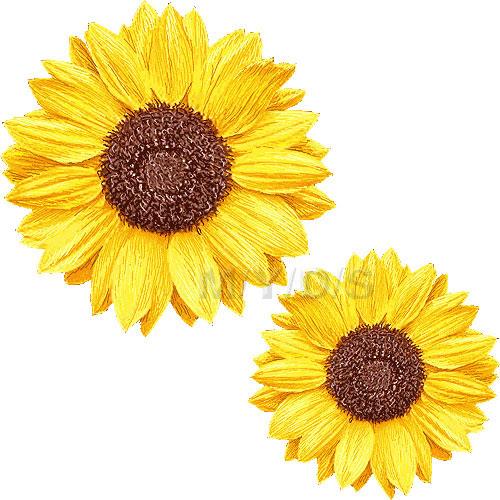 向日葵の花ヒマワリの花のイラスト条件付フリー素材集