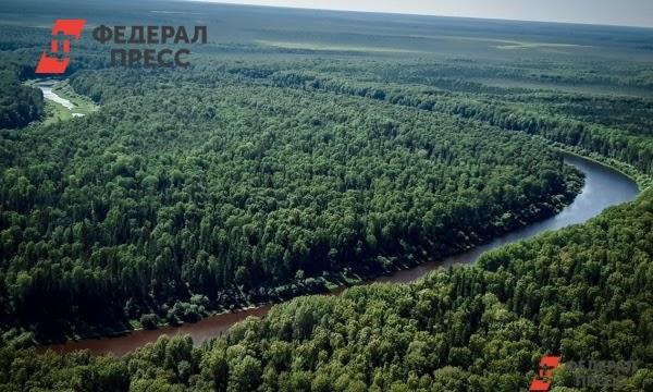 В Рослесхозе одобрили обустройство карбоновых полигонов в Югре | Ханты-Мансийский автономный округ