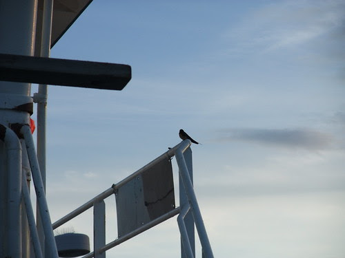 swallow by the wheelhouse