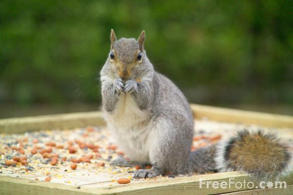 Back off my nuts!