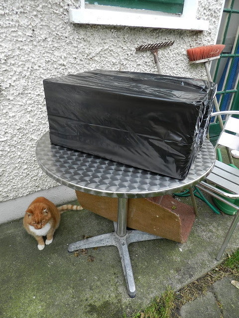 Ginga and a feral cat box