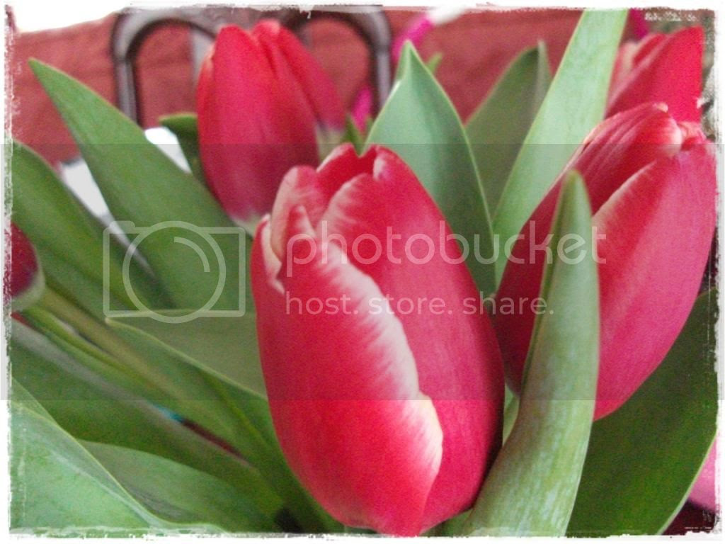Daffodils, make you smile