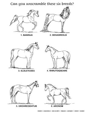 20 Best Images of Horse Tack Worksheet Printable - Horse ...