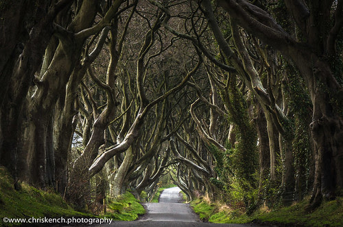 The Dark Hedges por www.chriskench.photography