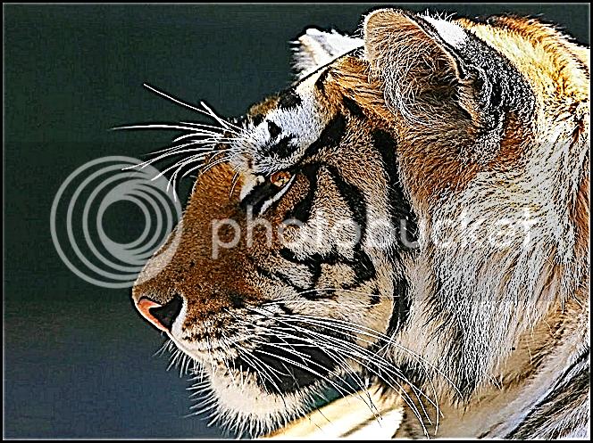 fractalius photoshop
