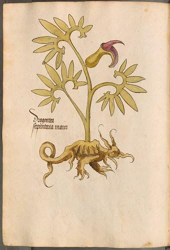 Arzneipflanzenbuch, 1525 g
