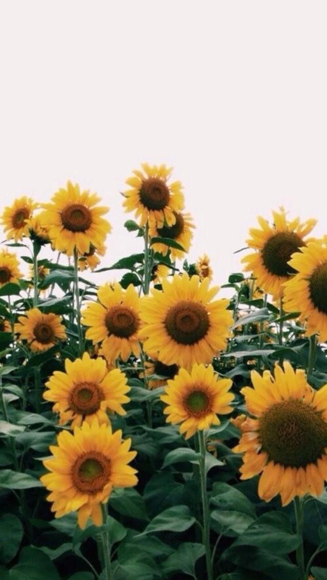 Gambar Bunga Aesthetic Hd Gambar Ngetrend Dan Viral