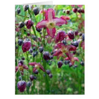 Epimedium Flowers Greeting Card