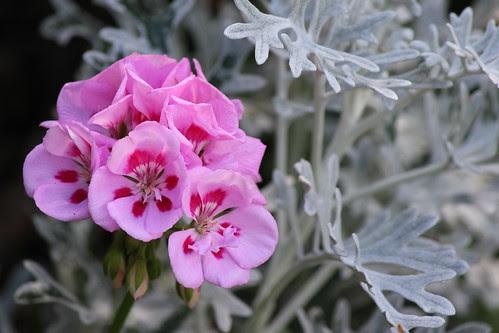 IMG_1580_At_Leila_Arboretum