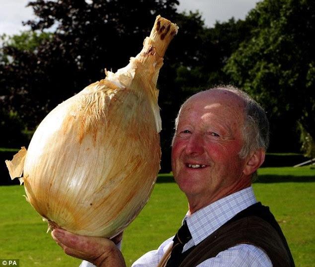 Astonishing: Two years ago, he grew the world's heaviest onion