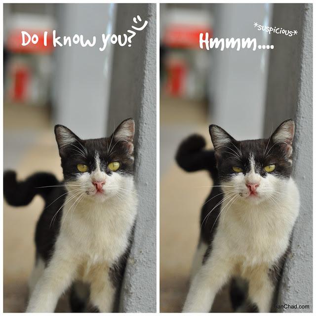Cat Can Talk