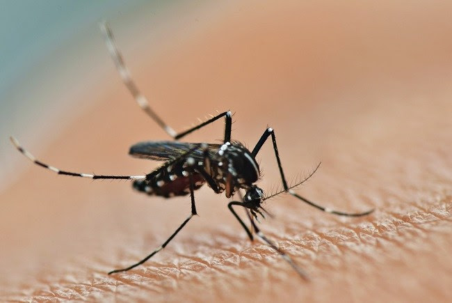 Zika Virus - alodokter