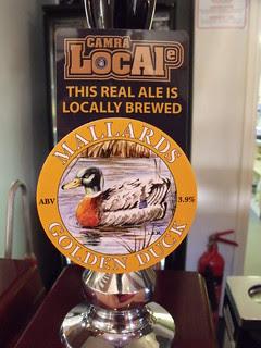 Mallards, Golden Duck, England.