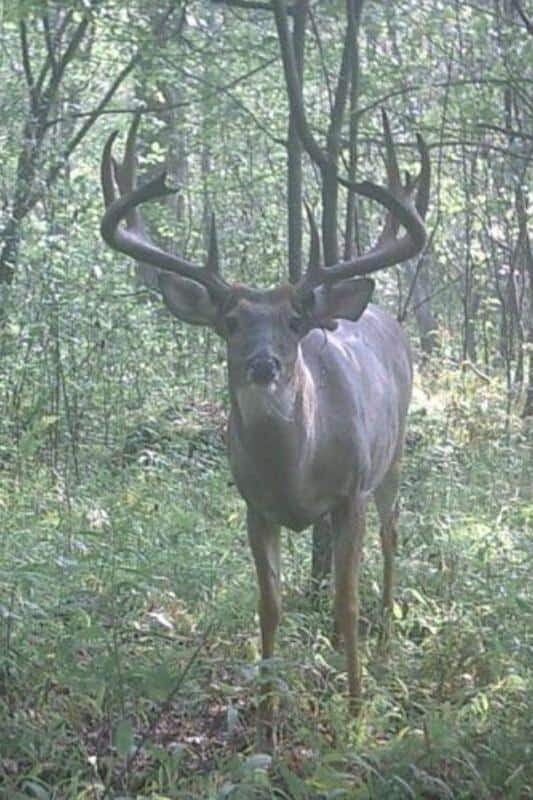 Trail Camera Giant 8 Point Bucks And More Big Deer