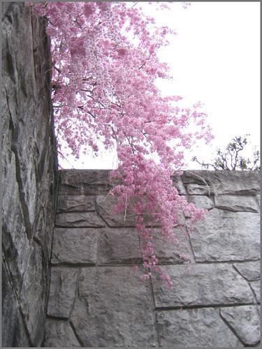 44 pink hanging down