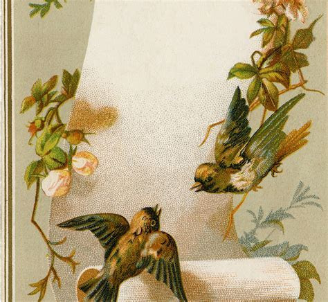 Vintage Birds Label Image   Lovely!   The Graphics Fairy
