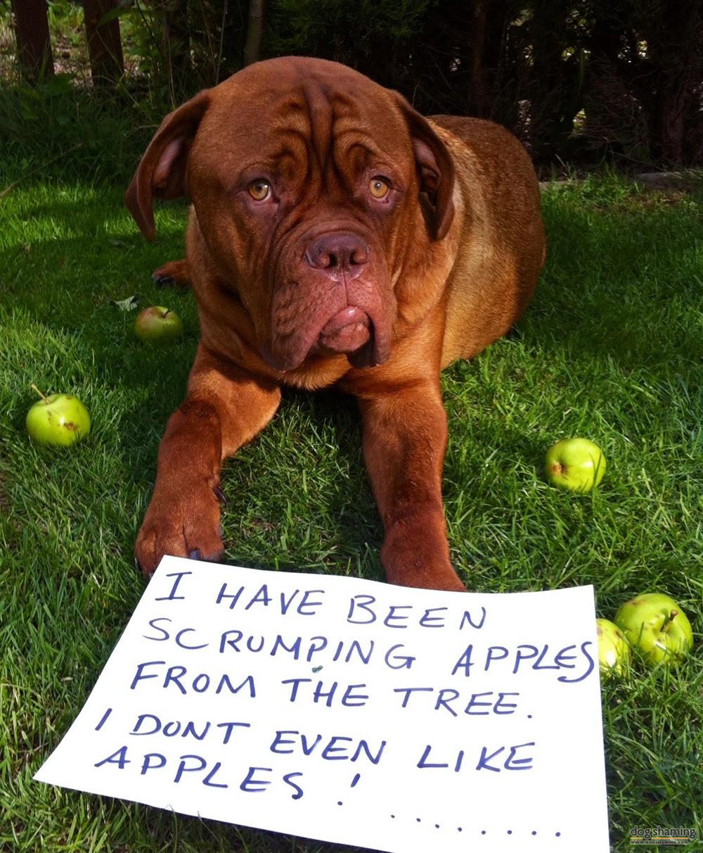 dog shaming 02 32 Hillarious Public Shaming of Dogs