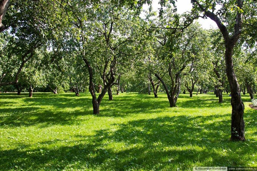 Сад в Коломенском