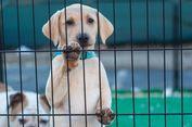 Hanya Satu RT di Bekasi yang Larang Warga Memelihara Anjing