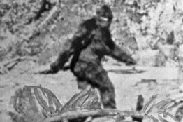 [Bigfoot]