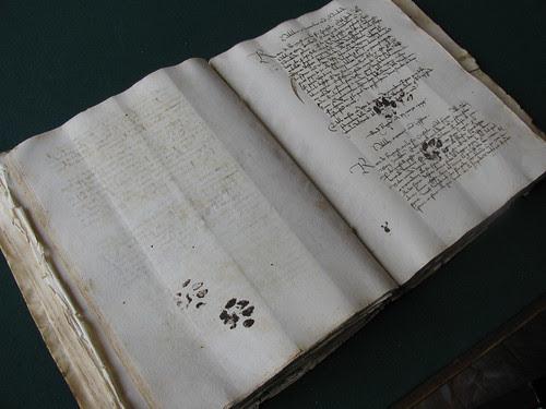Cat paw prints on a medieval manuscript