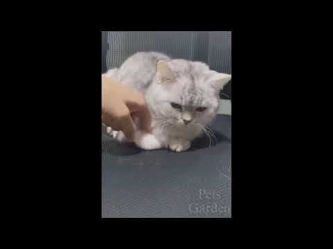 Top Funny Cats' Videos of the Week