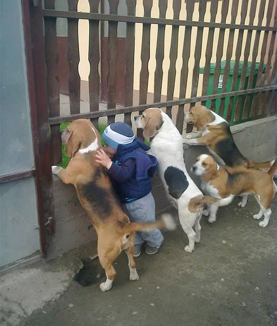 criança-animal-estimaçao-8