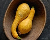 Yellow Squash, African Bowl, 2008