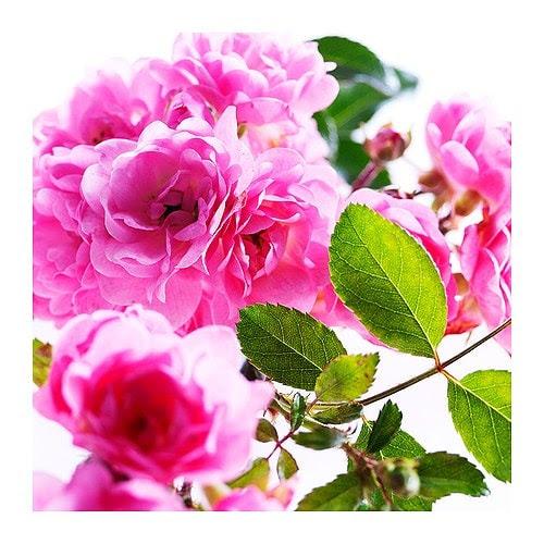 LÖNSBODA Vela perfumada em copo, rosa claro Altura: 13 cm Duração: 20 h