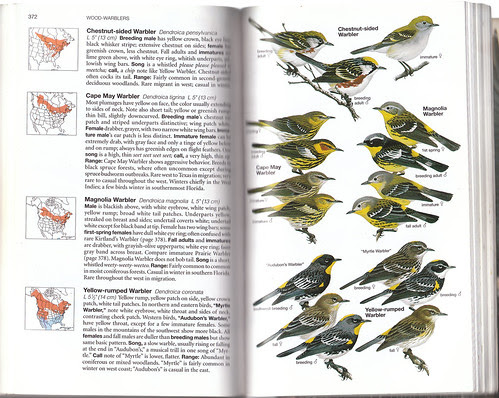 Nat Geo 4th Warblers