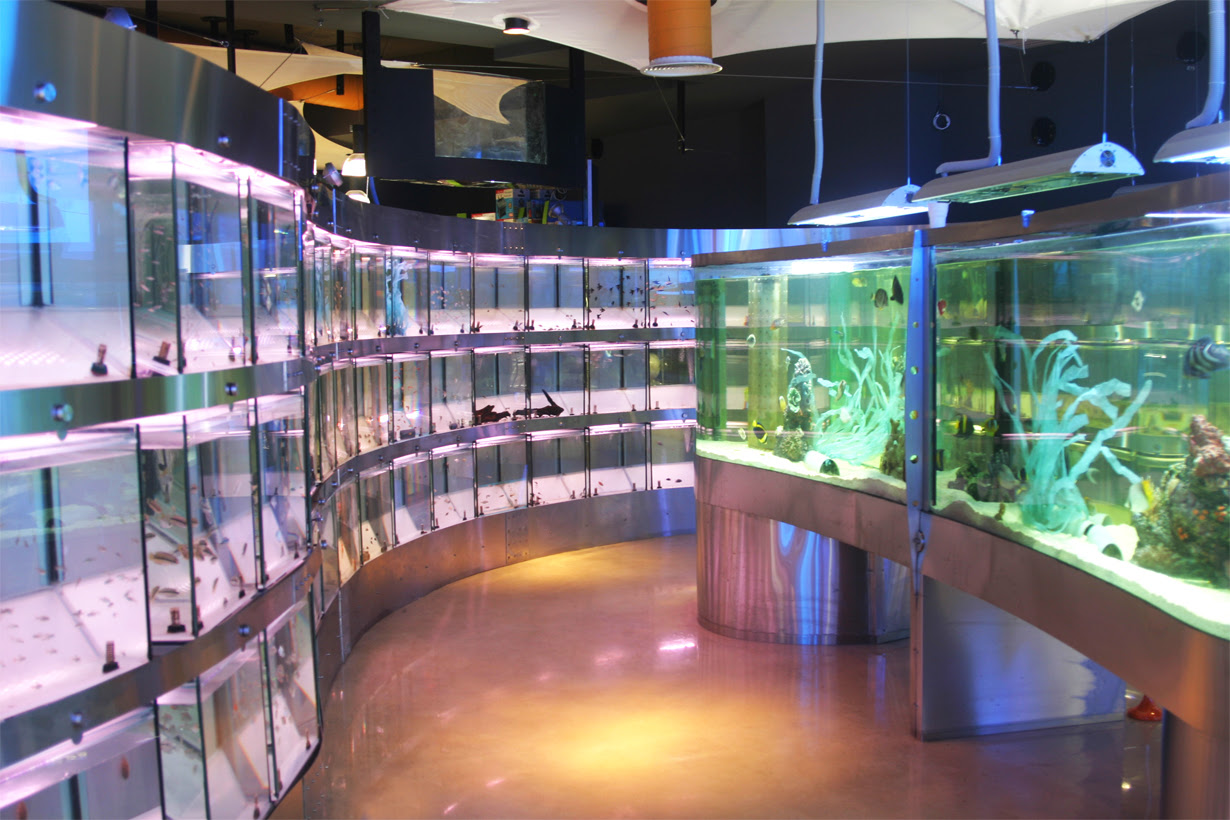 85 Ide Aquarium Design Shop Gratis Terbaik Download Gratis