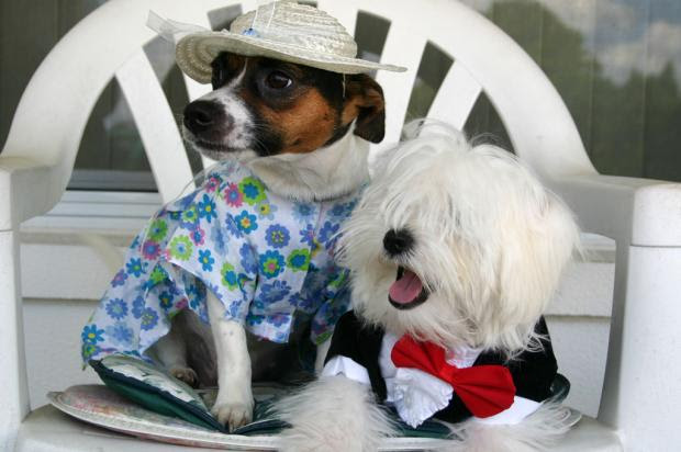 Cachorros preferem passear com as donas mulheres do que com homens Stock Photos/