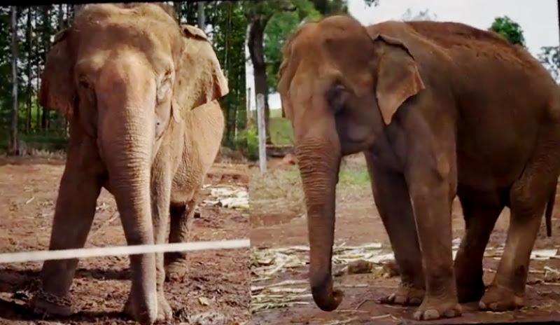 santuario-dos-elefantes-brasil-chapada-dos-guimaraes-maia-e-guida-800