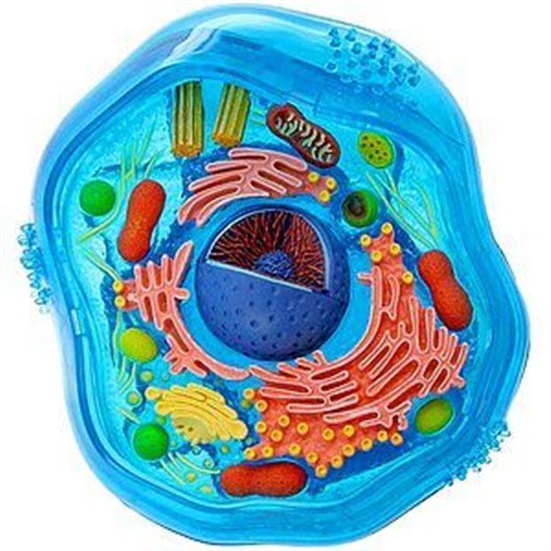 Το Νομπέλ Ιατρικής στην ενδοκυτταρική κυκλοφορία
