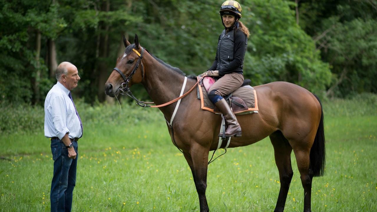 Wie Viel Kostet Das Teuerste Pferd Der Welt