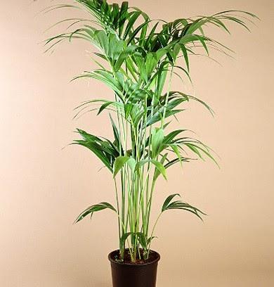 Dormitorio muebles modernos plantas altas de interior - Plantas resistentes de interior ...
