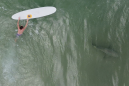 Drones reveal shark fests, though US bites remain rare