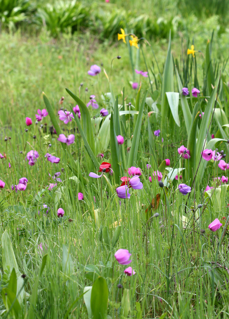 anemone_field