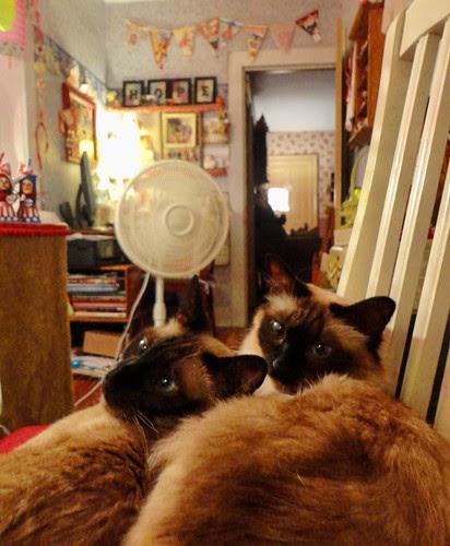 kitties in front of fan