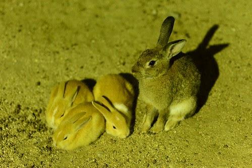 大久野島写真展「ヤセイノウサギ」2014 開催!