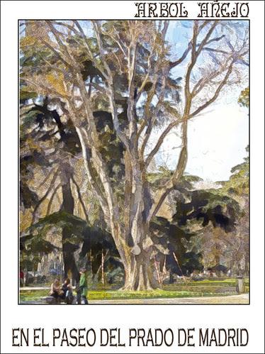 árbol añejo