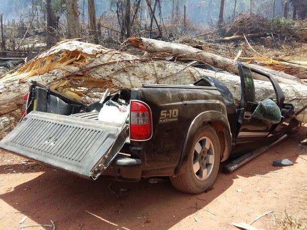 Árvore tombou sobre carro na vicinal 44, em Rorainópolis, no Sul de Roraima (Foto: Arquivo pessoal)