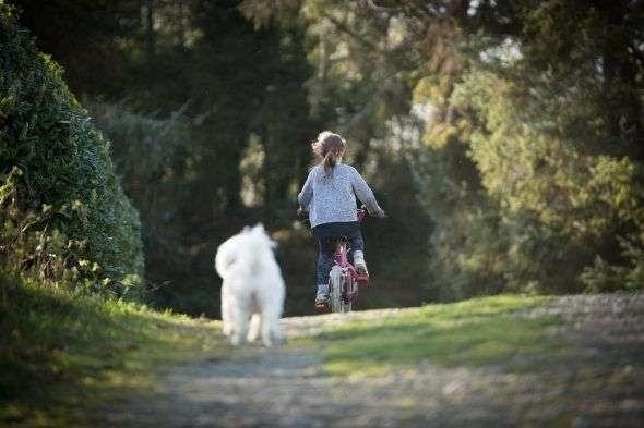 ¿Cuáles son las mejores razas de perros para niños?