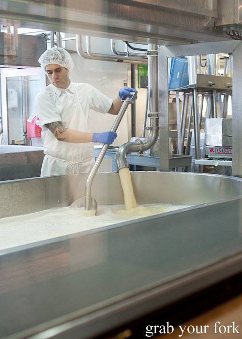 fresh milk for cheese making at beecher's handmade cheese flatiron district nyc new york usa