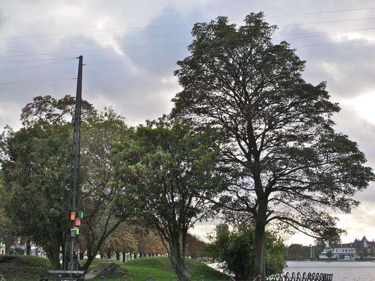 Endangered old trees