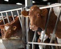 Include Animal Welfare in Foreign Trade Agreements