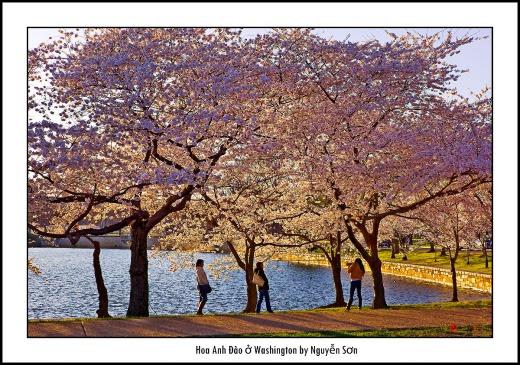 010 Mùa Xuân Washington