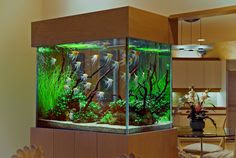 Cool Aquariums on Pinterest