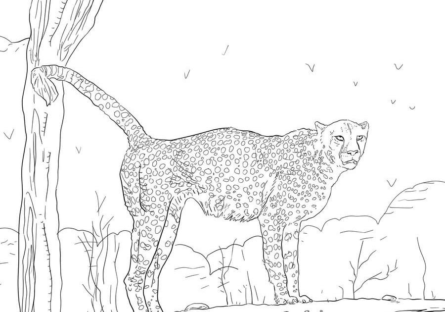 ausmalbilder gepard drucken  kinder färben