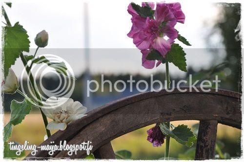 photo DSC_0993crop.jpg